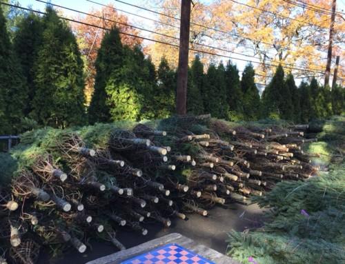Lions Club/Fire Dept Tree Sale at LaGrande Park