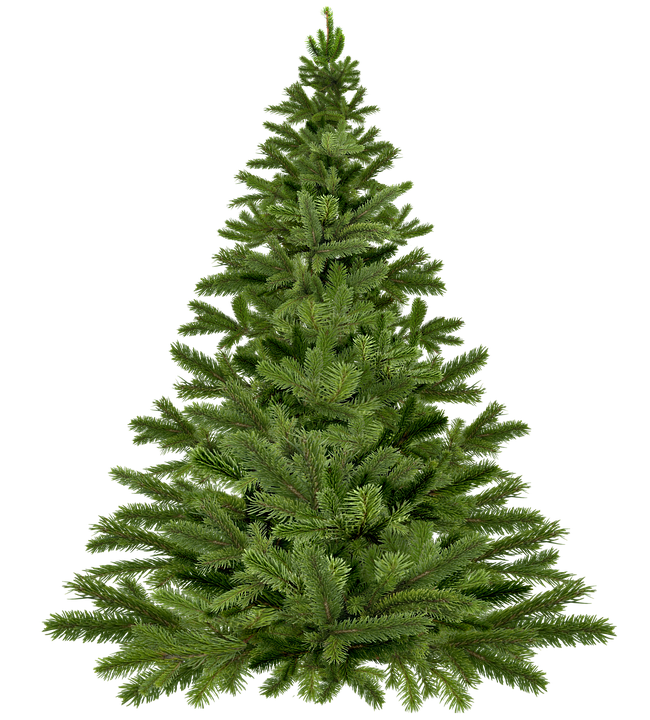 Christmas Tree Pick Up.Christmas Tree Pick Up Borough Of Fanwood